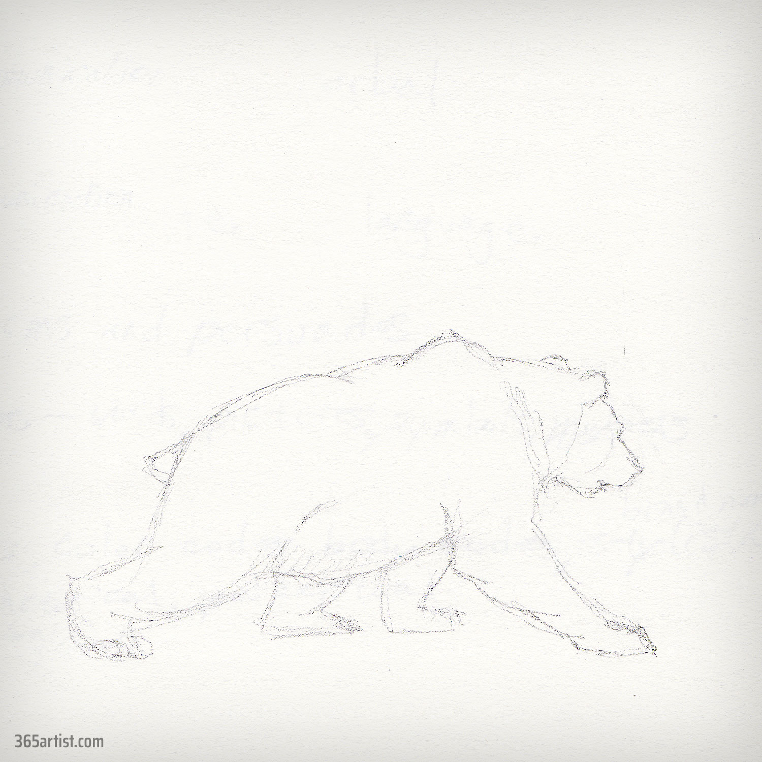 drawing of a bear
