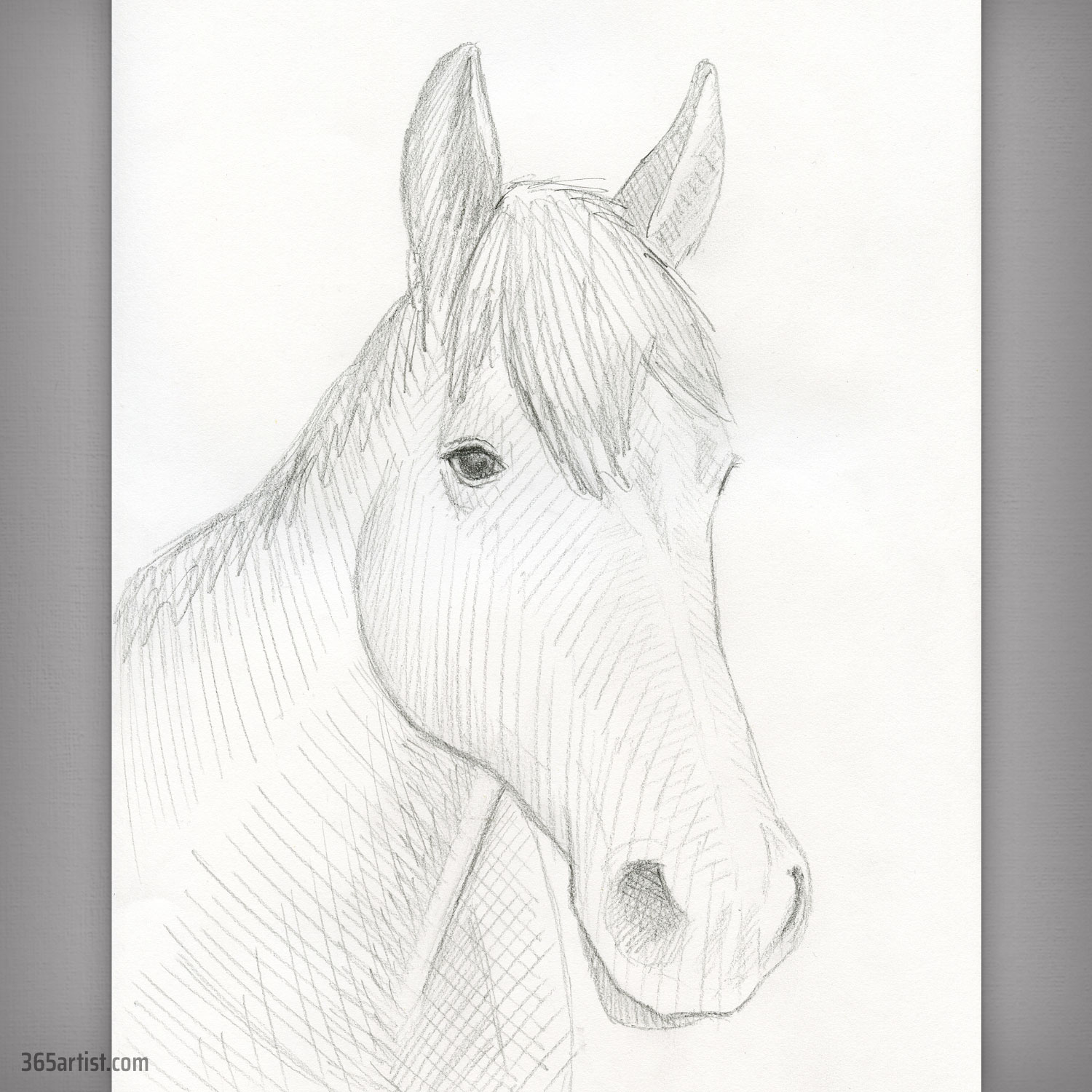 portrait drawing of a horse