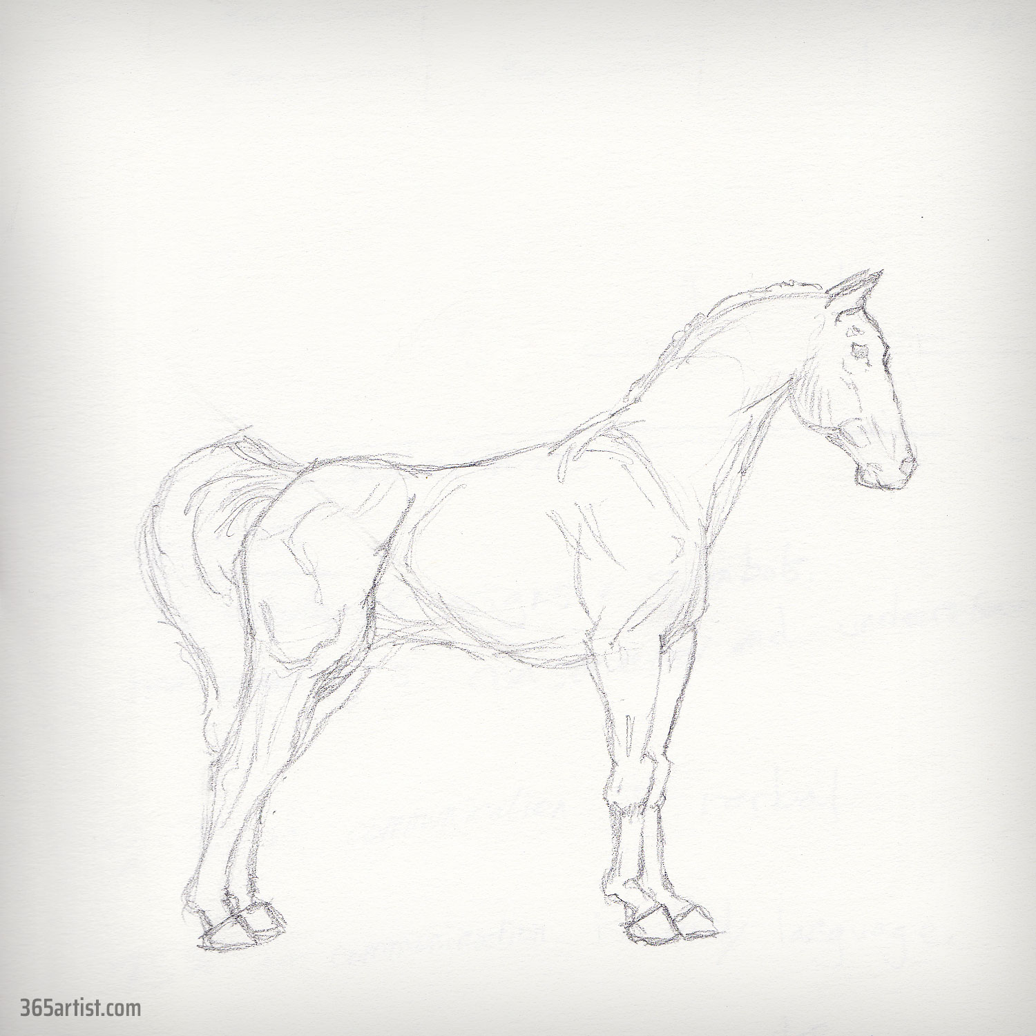 drawing sketch of a horse