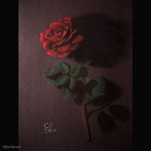 colored pencil drawing of a rose