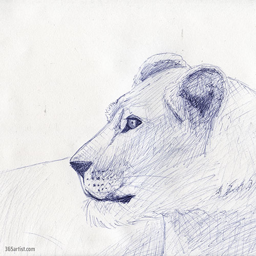 pen drawing of a lion
