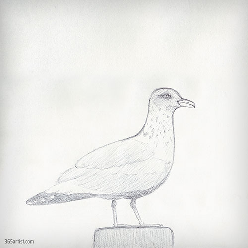 drawing of a seagull
